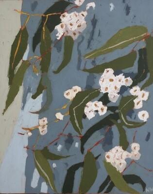 White Flowering Eucalyptus Nerang Track
