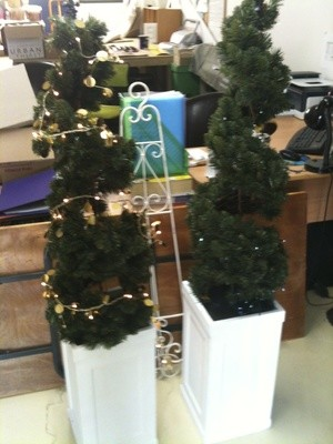 Spiral Topiary Trees in White Boxes
