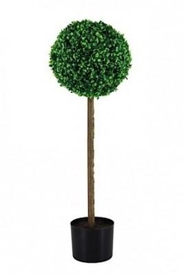 Topiary trees 80cm H