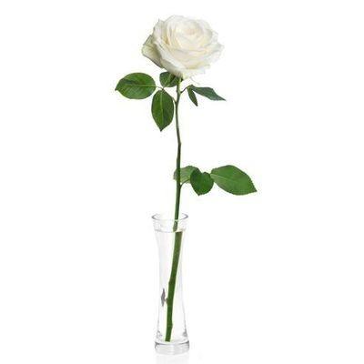 Roses - White Single
