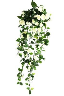 Roses - Hanging Bush