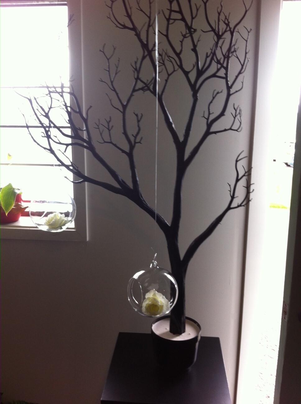 Black Coral Tree (Manzilla style) - 1m