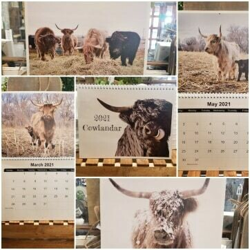 2021 Cowlander Highland Cows
