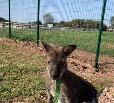 WALLABY Keeper Experience 1hr Up to 2 people