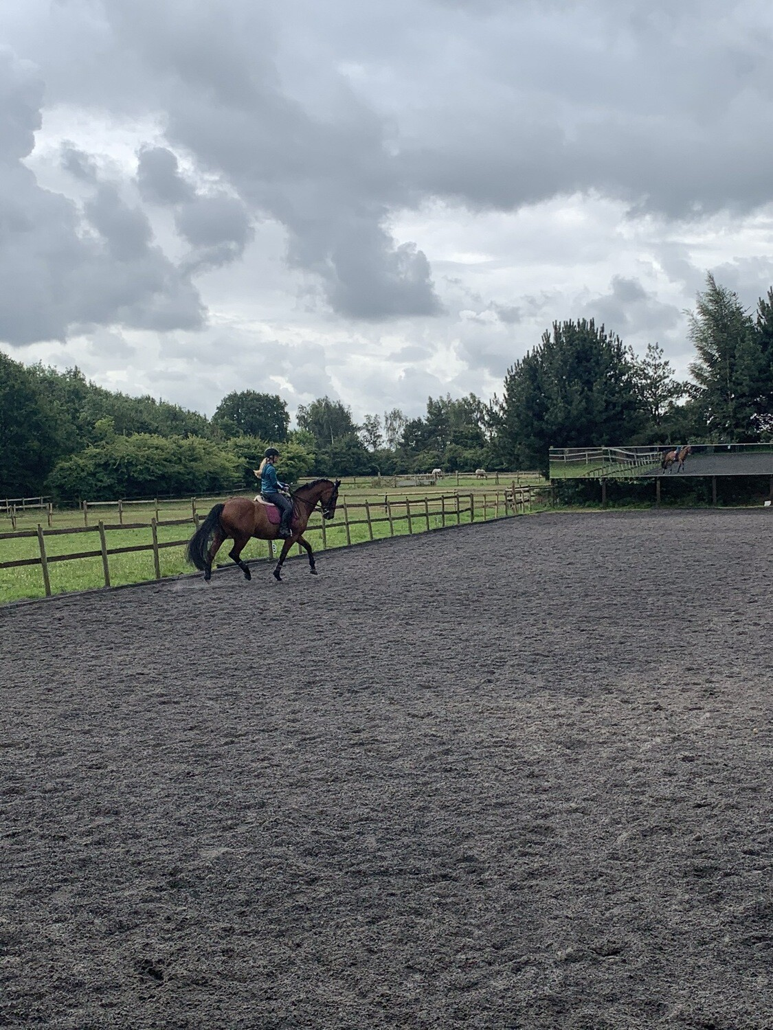 Mounted Follow Up Assessment : 30 Minutes : October 6th : Patsy Bartram (Client Must Have Had A Previous Assessment With Andy) Price Includes Arena Fee