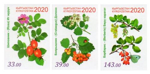 Киргизия. Флора. Лекарственные растения: шиповник, боярышник и барбарис. Серия из 3 беззубцовых марок