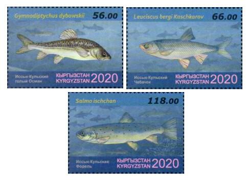 Киргизия. Фауна. Иссык-Кульские виды рыб: голый осман, чебачок и форель. Серия из 3 марок