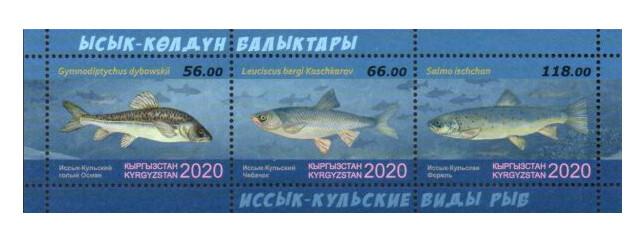 Киргизия. Фауна. Иссык-Кульские виды рыб: голый осман, чебачок и форель. Почтовый блок из 3 марок