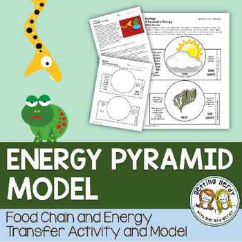 Energy Pyramid Model for Ecosystems