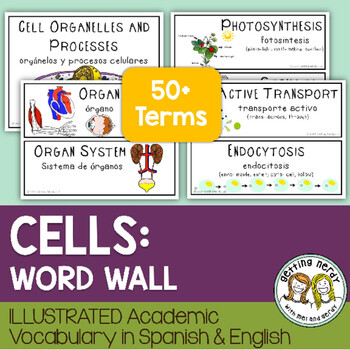 Cells - Word Wall