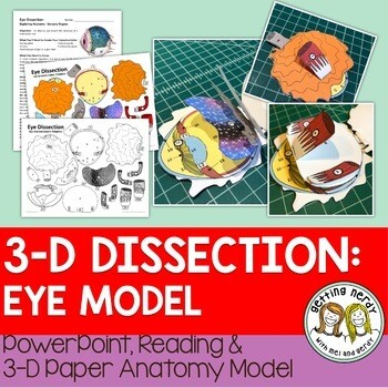 Eye Paper Dissection - Scienstructable 3D Dissection Model