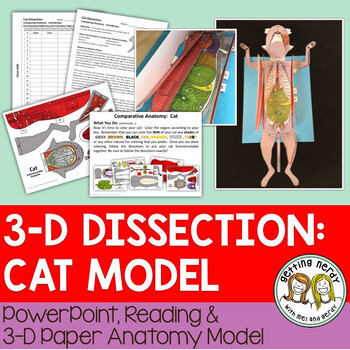 Cat Paper Dissection - Scienstructable 3D Dissection Model