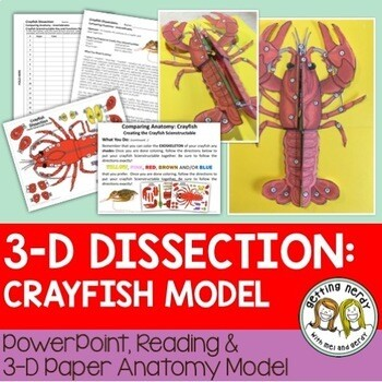 Crayfish Paper Dissection - Scienstructable 3D Dissection Model