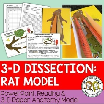 Rat Paper Dissection - Scienstructable 3D Dissection Model