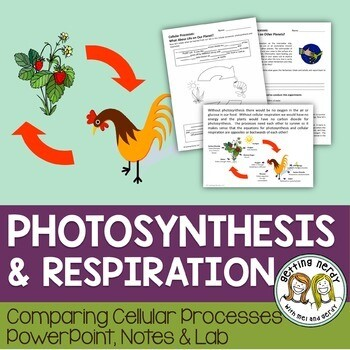 Photosynthesis and Respiration - PowerPoint and Handouts - Distance Learning + Digital Lesson