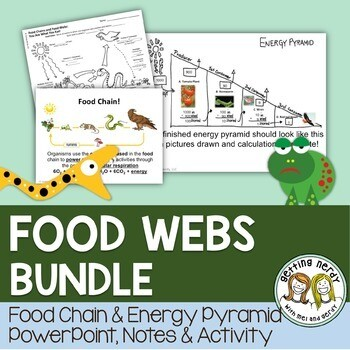 Food Chains Food Webs and Energy Pyramids