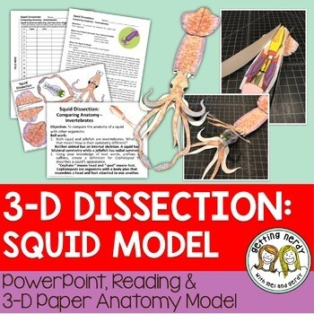 Squid Paper Dissection - Scienstructable 3D Dissection Model