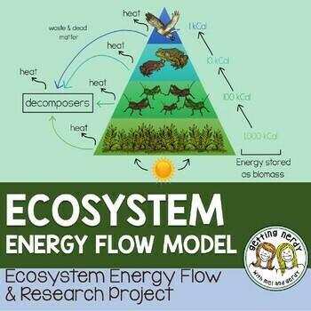 Ecology - Ecosystem Energy Flow Model