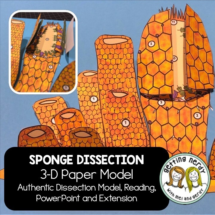 Sponge Paper Dissection - Scienstructable 3D Dissection Model - Distance Learning + Digital Lesson