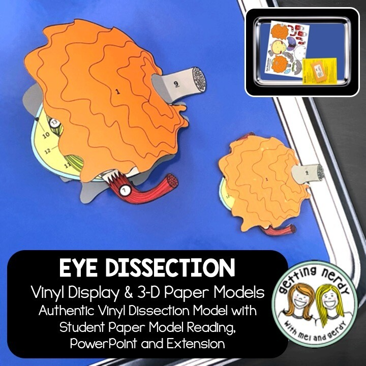 Eye Vinyl Dissection - Scienstructable 3D Dissection Model