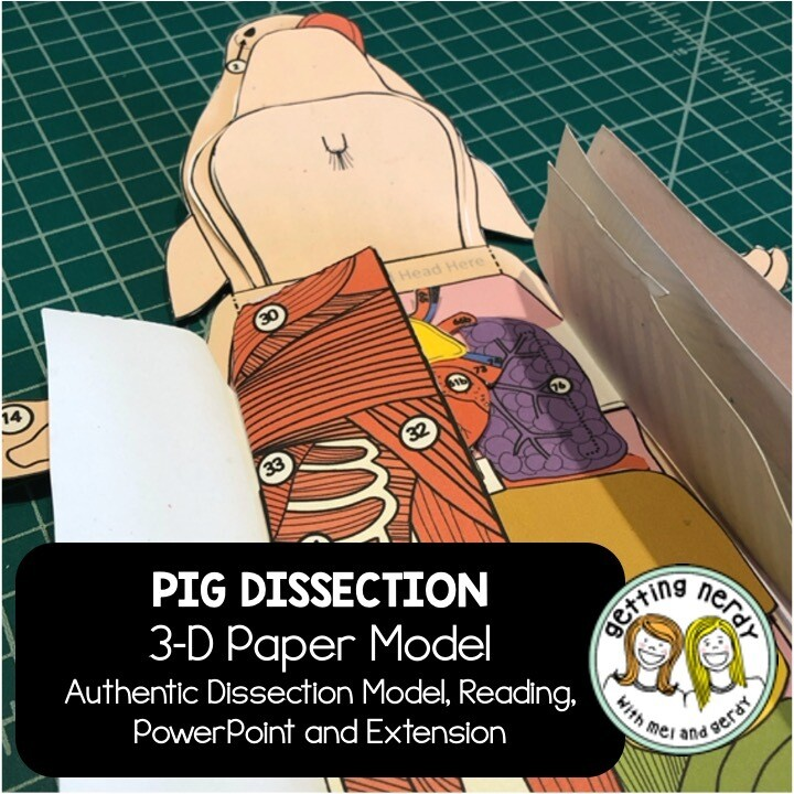 Fetal Pig Paper Dissection - Scienstructable 3D Dissection Model - Distance Learning + Digital Lesson
