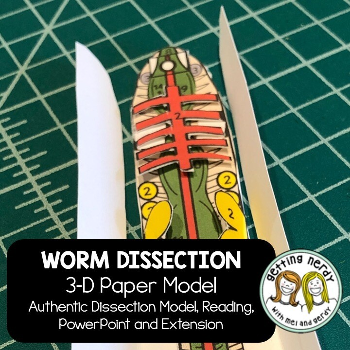 Earthworm Paper Dissection - Scienstructable 3D Dissection Model - Distance Learning + Digital Lesson
