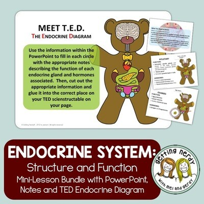 Endocrine System - Human Body Distance Learning + Digital Lesson