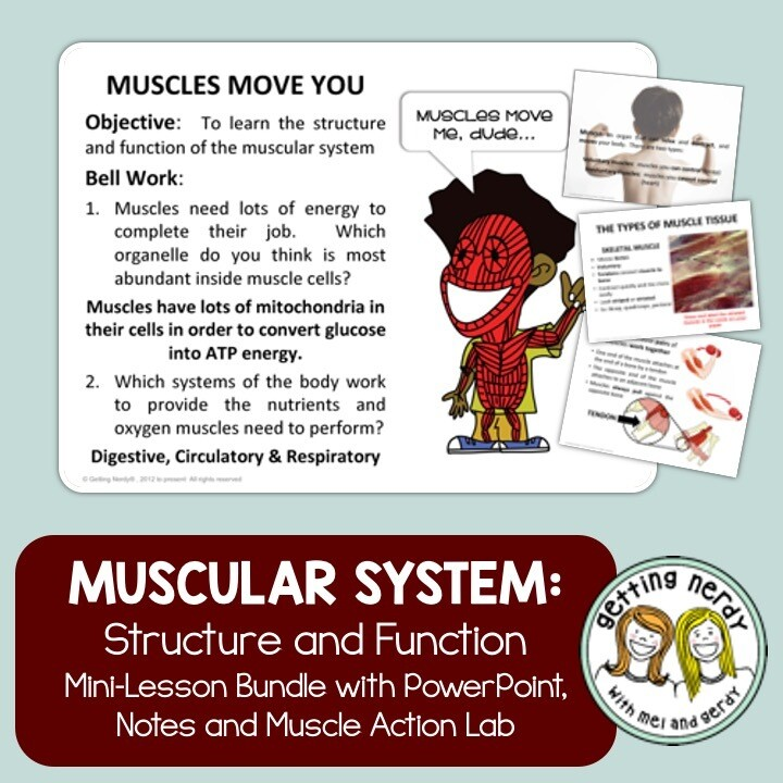 Muscular System - Human Body Distance Learning + Digital Lesson