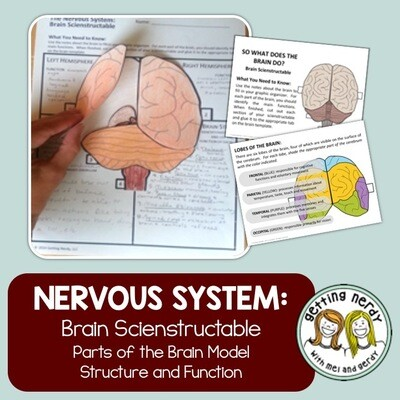 Nervous System - Brain - Human Body Distance Learning + Digital Lesson