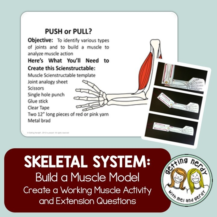 Skeletal and Muscular System - Joint Model - Distance Learning + Digital Lesson