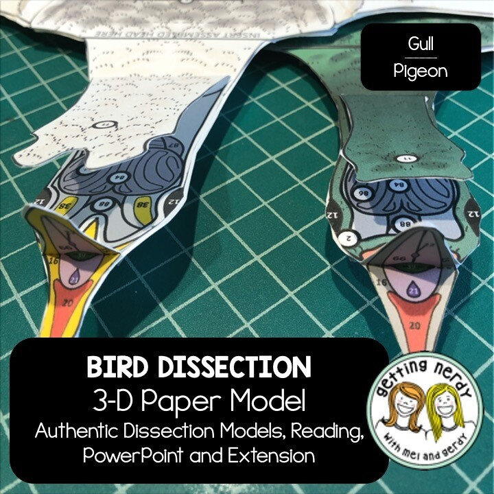 Bird Paper Dissection - Scienstructable 3D Dissection Model - Distance Learning + Digital Lesson