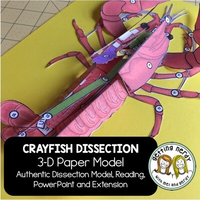 Crayfish Paper Dissection - Scienstructable 3D Dissection Model - Distance Learning + Digital Lesson