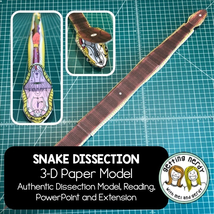 Snake Paper Dissection - Scienstructable 3D Dissection Model - Distance Learning + Digital Lesson