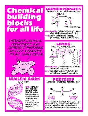 Carbos Lipds Proteins Nucleic Acids