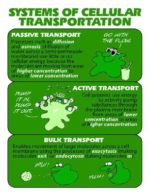 Cellular Transportation
