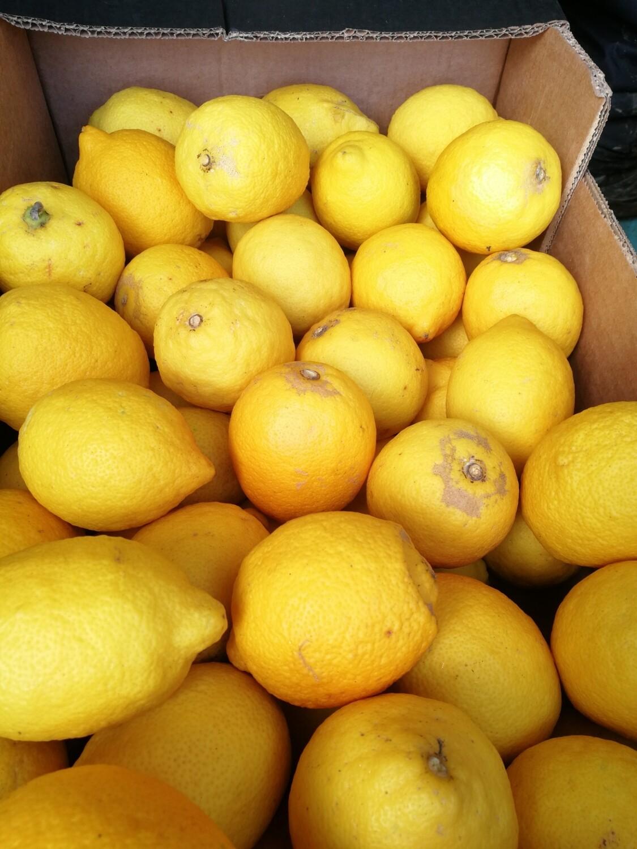 Citrons bio de Sicile -1kg