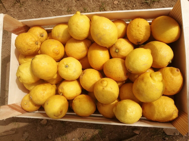 Cagette bois de Citrons bio Sicile provenance Directe -5kg