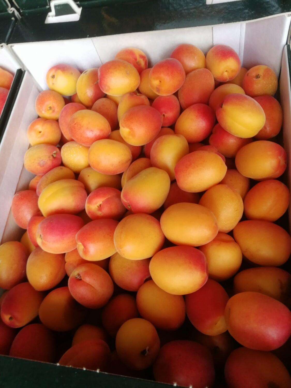 Cagette de 5kg abricots C2 biologique (66)