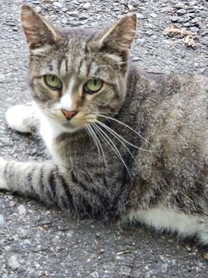 Focus on Ferals Raffle - Enter to Win a $150.00 Gift Certificate to Driftwood Yarns!