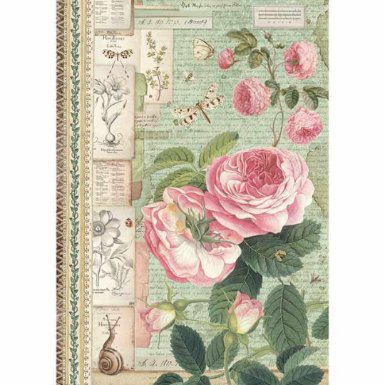 Botanic English Roses with Snail - A4 -Stamperia Rice Paper