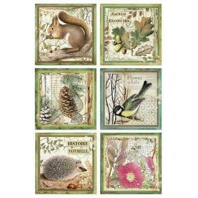 Forest Framed Animals A4 Rice Paper - Stamperia