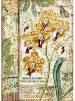 Orchid A4 Rice Paper - Amazonia Collection - Stamperia
