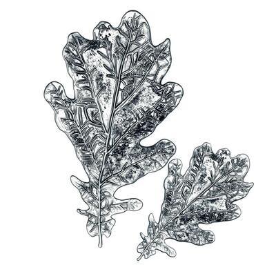 Tim Holtz Sizzix 3-D Impresslits Oak Leaf
