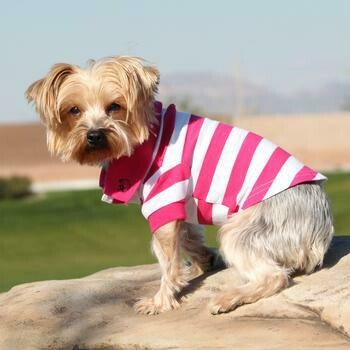 Striped Dog Polo - Pink and White
