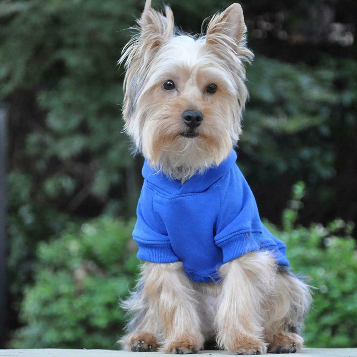 Flex-Fit Dog Hoodie (Blue)