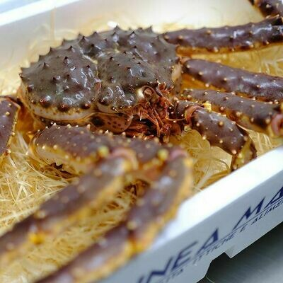 Granchio Reale King Crab Vivo intero - Vendita al pezzo