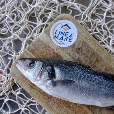 Branzino intero eviscerato all. Mar Adriatico - Pesce da 400/500 gr.