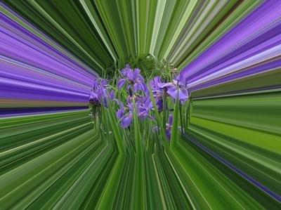 Printed Greeting Card- Iris Prism