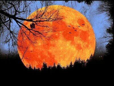 Single Filled Pen - Autumn Moon
