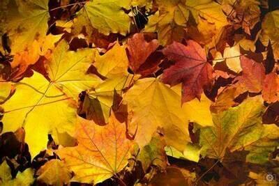 Single Filled Pen - Autumn Foliage